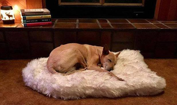 Top-Best-Dog-Beds-for-your-buddy-1.8