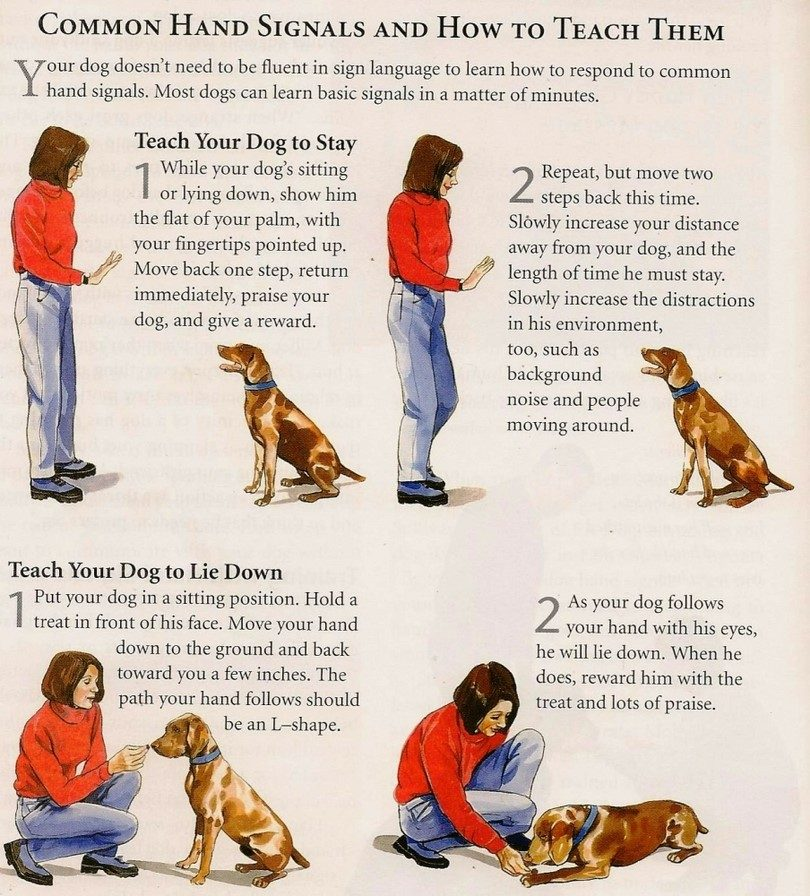 How-to-train-dogs-to-stay-in-his-place-